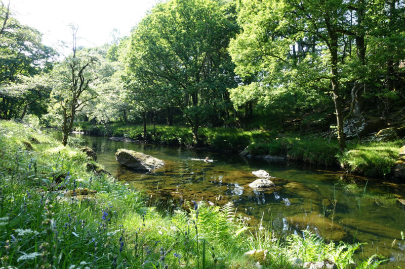 Where to Swim in the Lake District: Swimming in the Upper River Esk